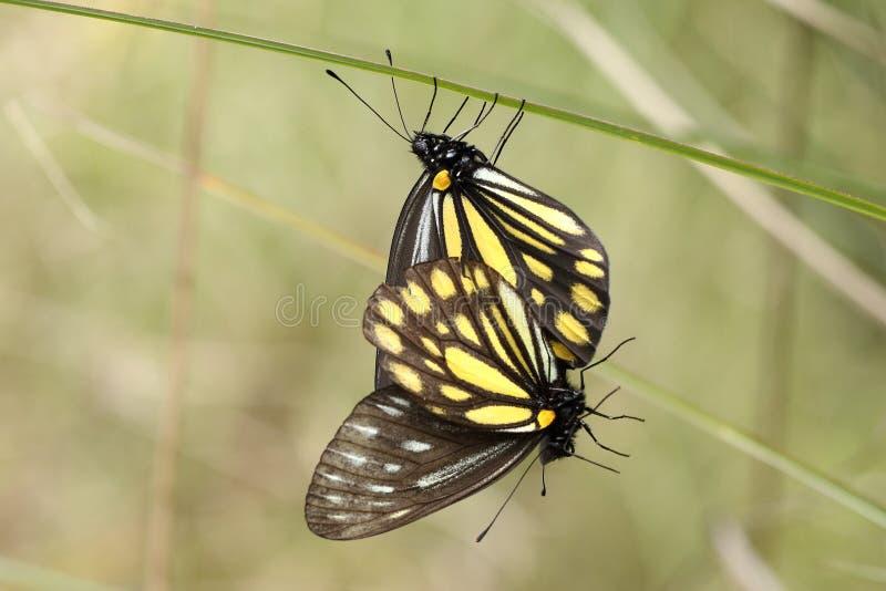 Härlig färgrik fjäril i natur arkivfoton