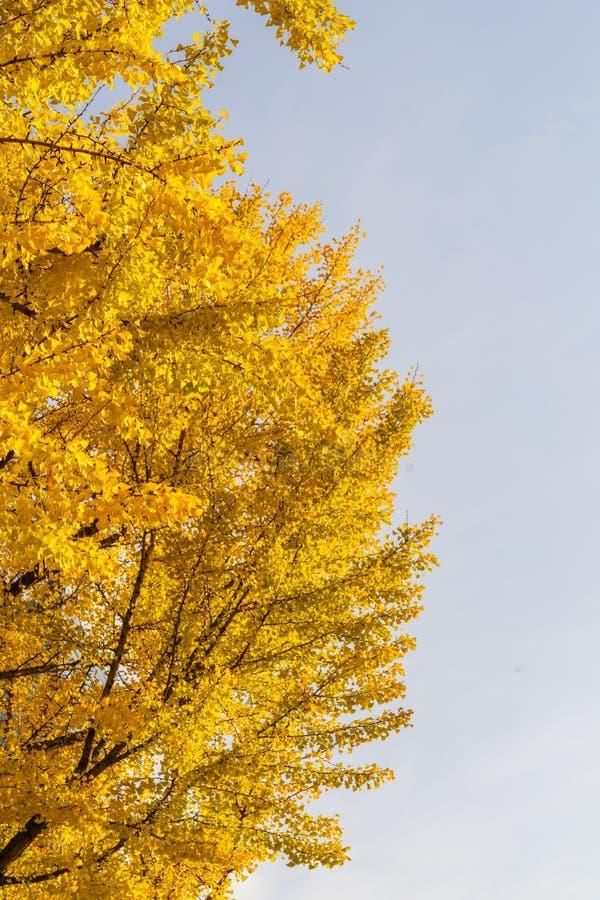 Härlig färgrik höst fotografering för bildbyråer