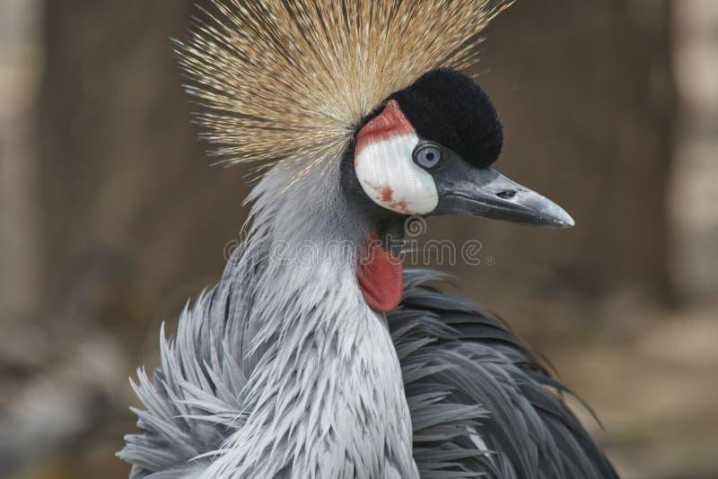 Härlig färgrik och exotisk fågel arkivbild