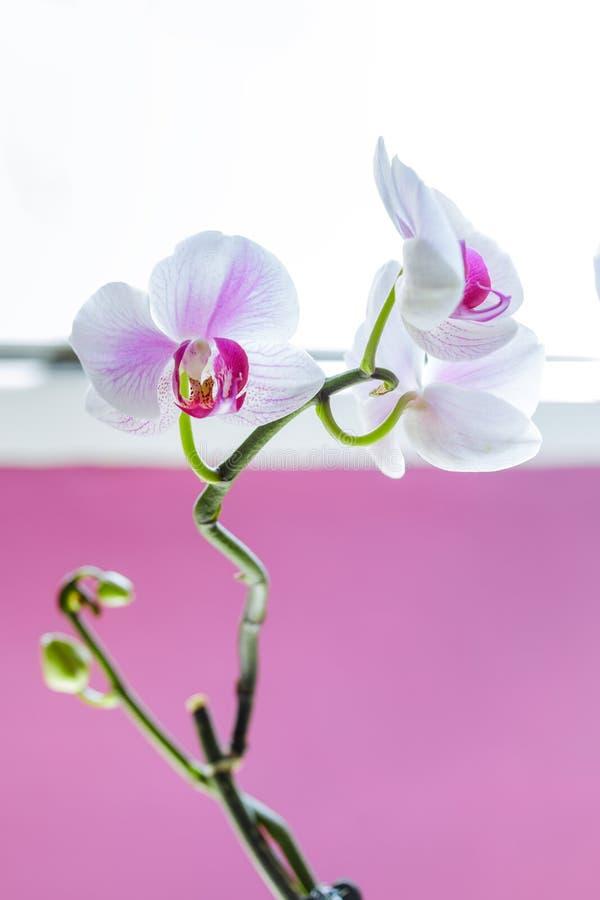Härlig färgrik orkidéblomma Fantastiska orkidér royaltyfria foton
