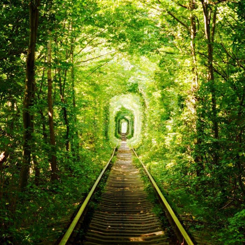Härlig färgrik trädgränd i skogen, naturlig bakgrund Magisk tunnel av förälskelse, gröna träd och järnvägen, i Ukraina arkivbilder