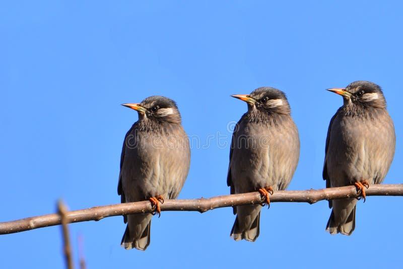 härlig fågel royaltyfri fotografi