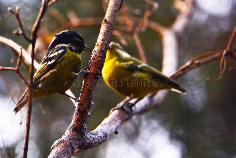 härlig fågel fotografering för bildbyråer