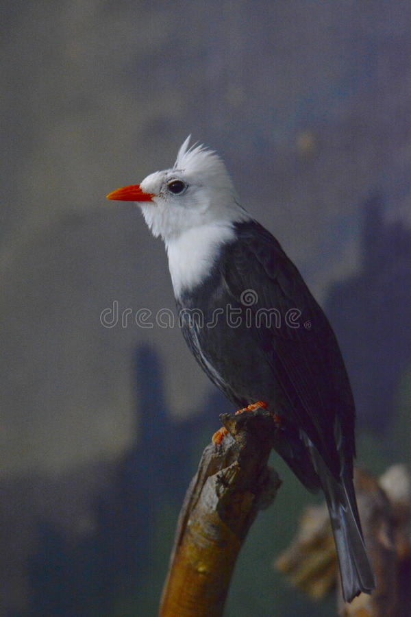 härlig fågel royaltyfri foto