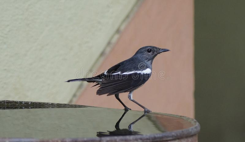 härlig fågel arkivfoto