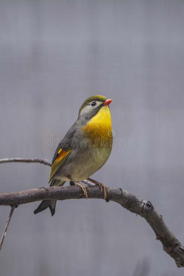 härlig fågel arkivbild