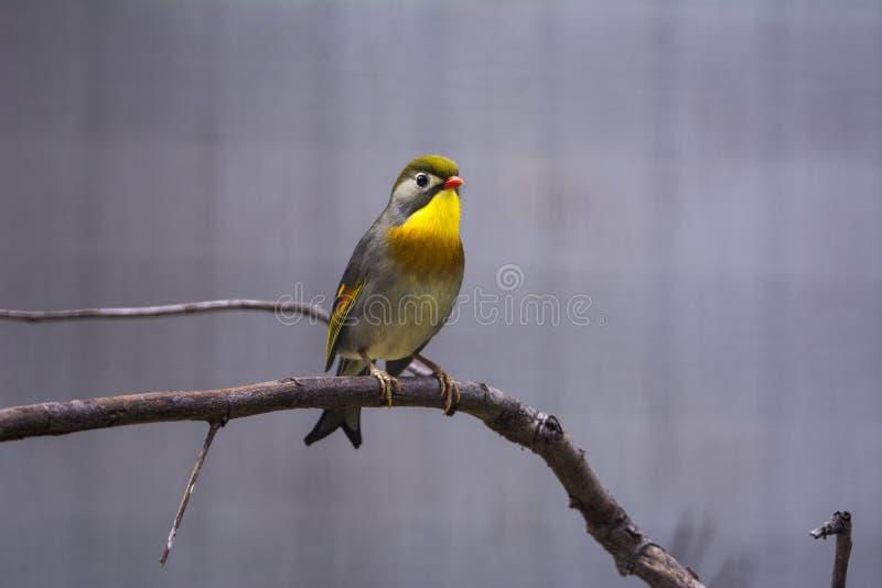 härlig fågel arkivbilder