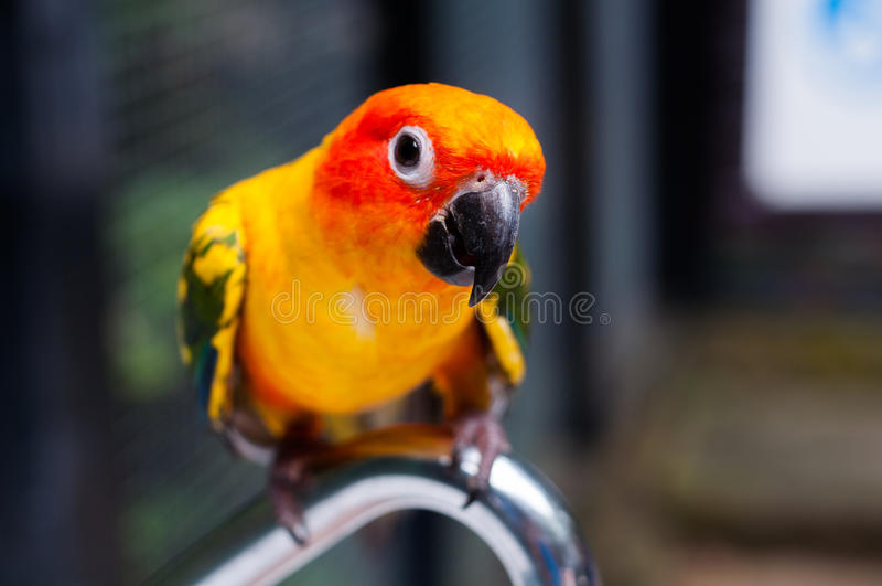 härlig fågel royaltyfria bilder
