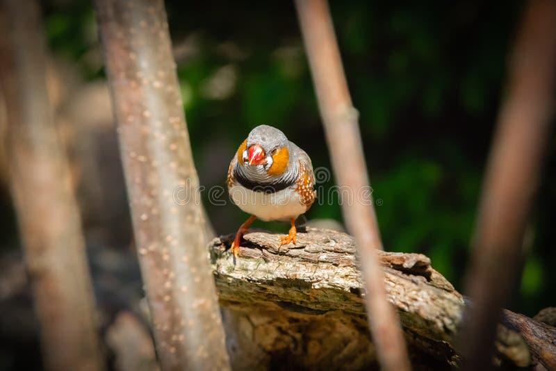 Härlig fågel mellan trädfilialer royaltyfri foto