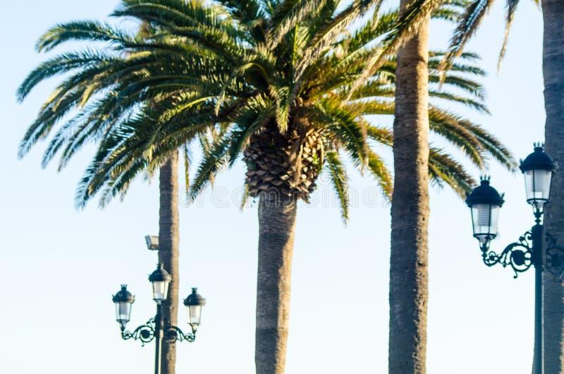 Härlig fördelande palmträd, exotiskt växtsymbol av ferier, royaltyfria foton