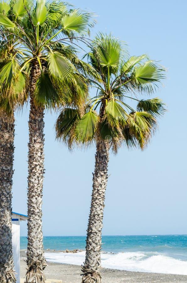 Härlig fördelande palmträd, exotiskt växtsymbol av ferier, royaltyfri bild