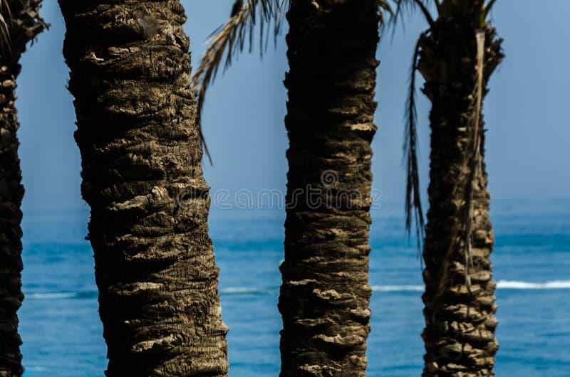 Härlig fördelande palmträd, exotiskt växtsymbol av ferier, arkivbilder