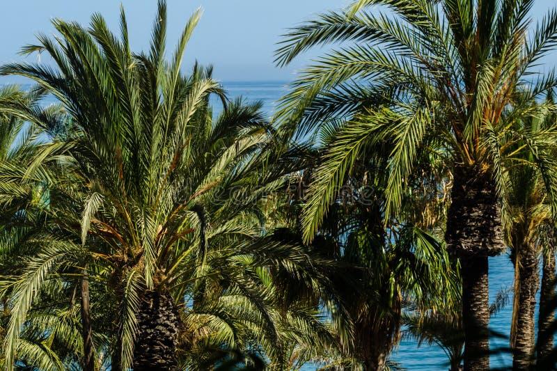Härlig fördelande palmträd, exotiskt växtsymbol av ferier, royaltyfri foto