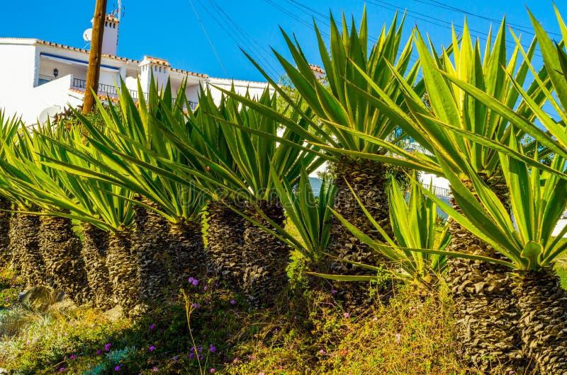 Härlig fördelande palmträd på stranden, exotiskt växtsymbol royaltyfri foto