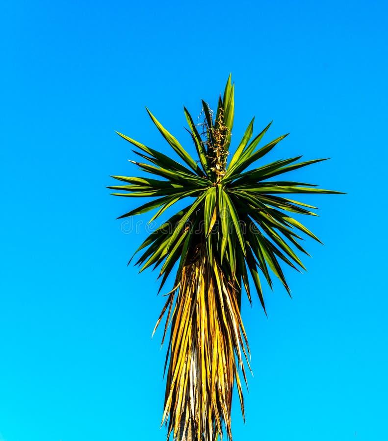 Härlig fördelande palmträd på stranden, exotiskt växtsymbol arkivbilder