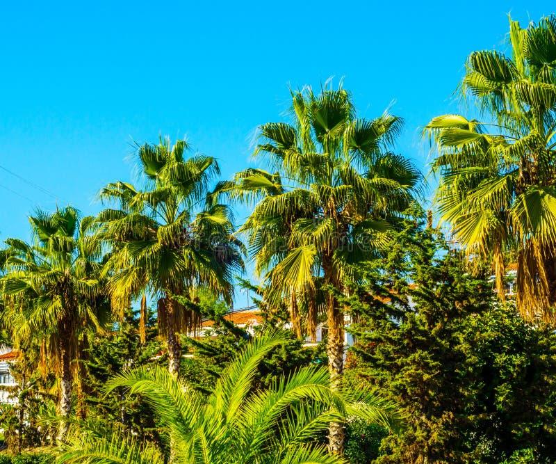 Härlig fördelande palmträd på stranden, exotiskt växtsymbol arkivbild