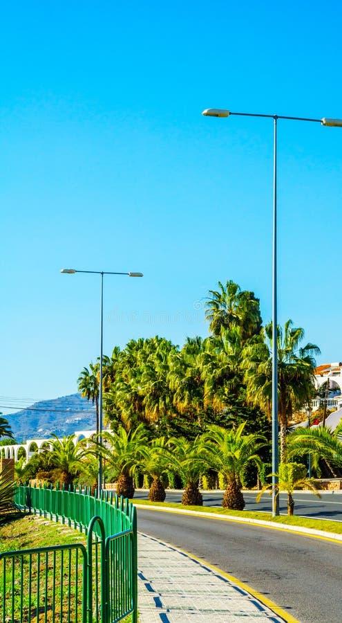 Härlig fördelande palmträd på stranden, exotiskt växtsymbol arkivfoto
