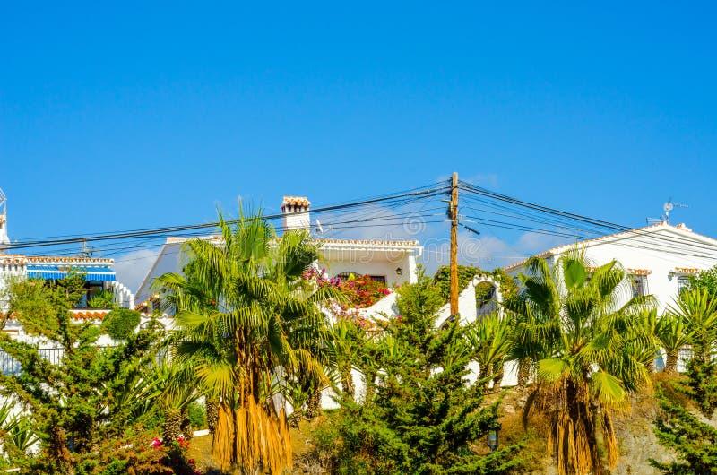Härlig fördelande palmträd på stranden, exotiskt växtsymbol royaltyfri bild