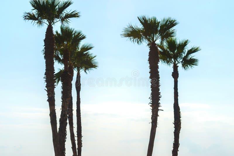 Härlig fördelande palmträd på stranden, exotiskt växtsymbol arkivfoton