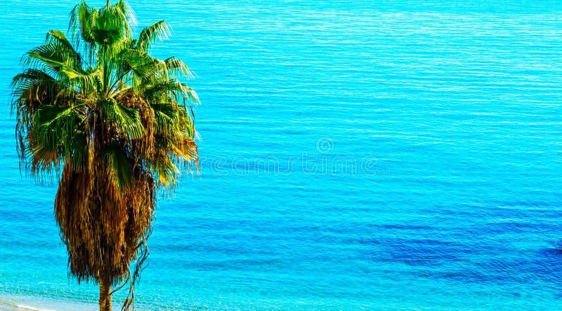 Härlig fördelande palmträd på stranden, exotiskt växtsymbol fotografering för bildbyråer