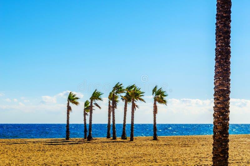 Härlig fördelande palmträd på stranden, exotiskt växtsymbol royaltyfria foton