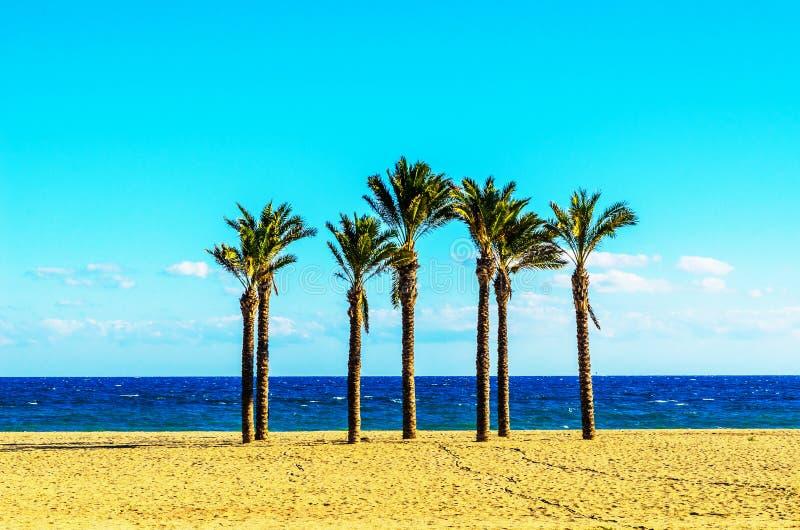 Härlig fördelande palmträd på stranden, exotiskt växtsymbol royaltyfri fotografi