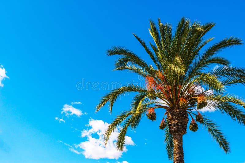 Härlig fördelande palmträd på stranden, exotiskt växtsymbol royaltyfria bilder