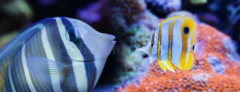 härlig fisk för akvarium royaltyfri foto