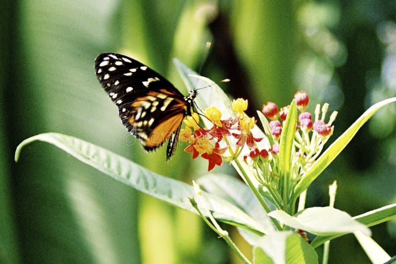 härlig fjäril arkivbild