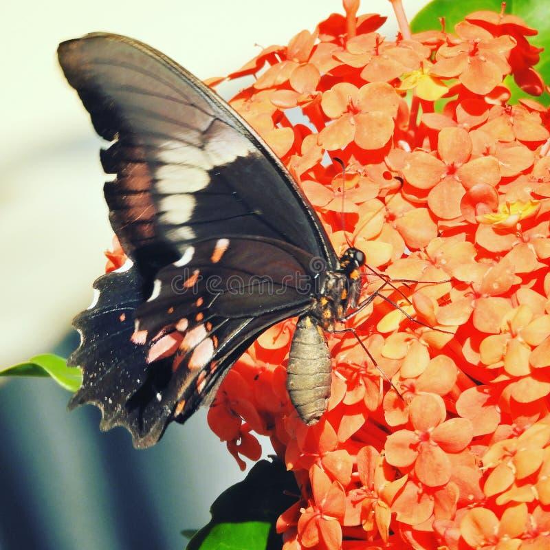 Härlig fjäril i blomman i natur arkivfoto