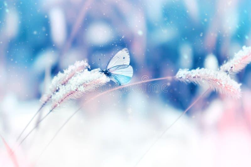 Härlig fjäril i snön på det lösa gräset på en blått- och rosa färgbakgrund snowing Naturlig bild för konstnärlig vinterjul royaltyfri foto