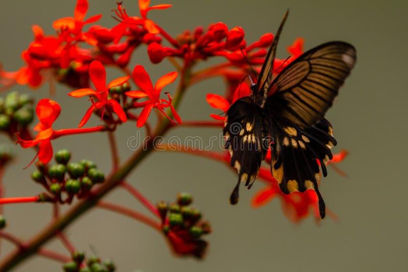 Härlig fjäril på en mycket nätt röd blomma arkivfoto