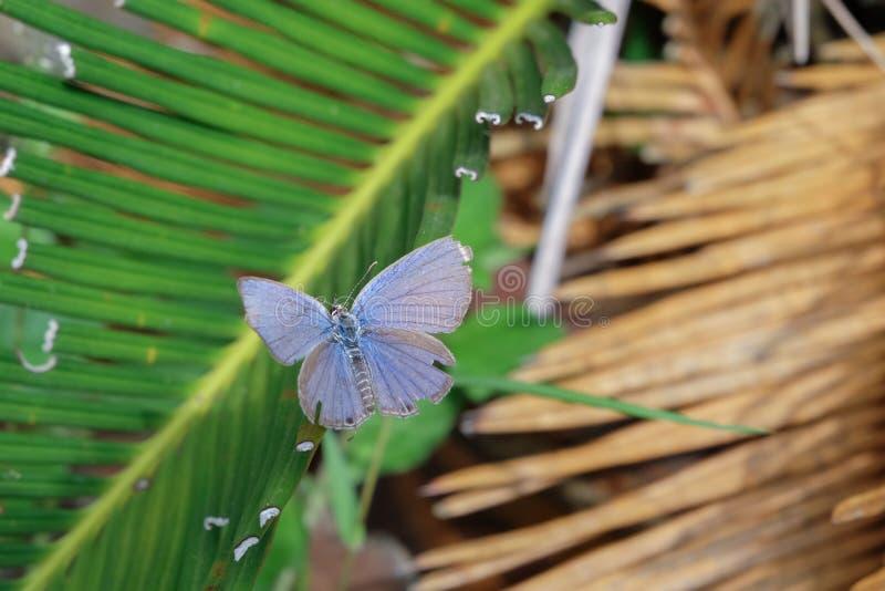 Härlig fjäril på gröna sidor royaltyfri foto