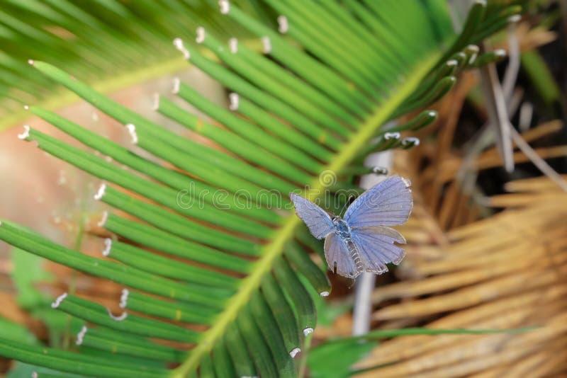 Härlig fjäril på gröna sidor royaltyfri bild
