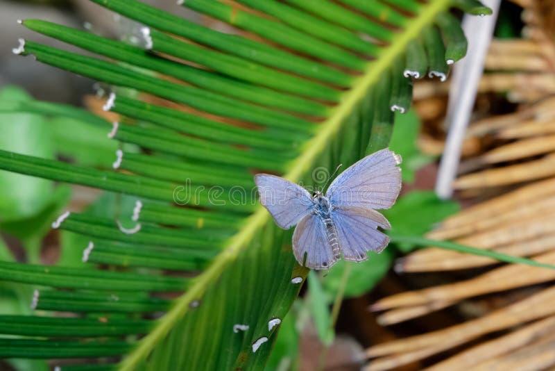 Härlig fjäril på gröna sidor arkivfoto