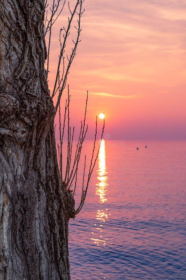 Härlig flerfärgad solnedgångsikt på sjön Garda I förgrunden är en texturerad trädstam italy royaltyfria foton