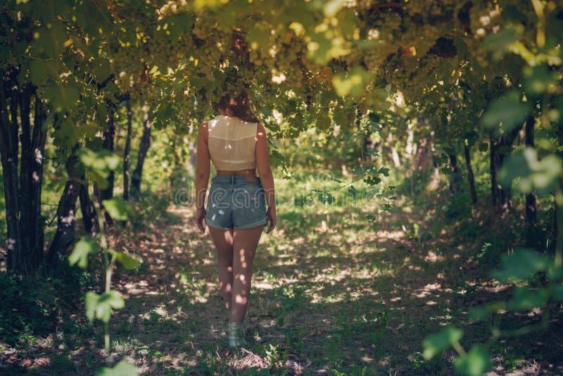 Härlig flicka i kortslutningar och överkant i en vingård på en varm solig afton arkivbilder