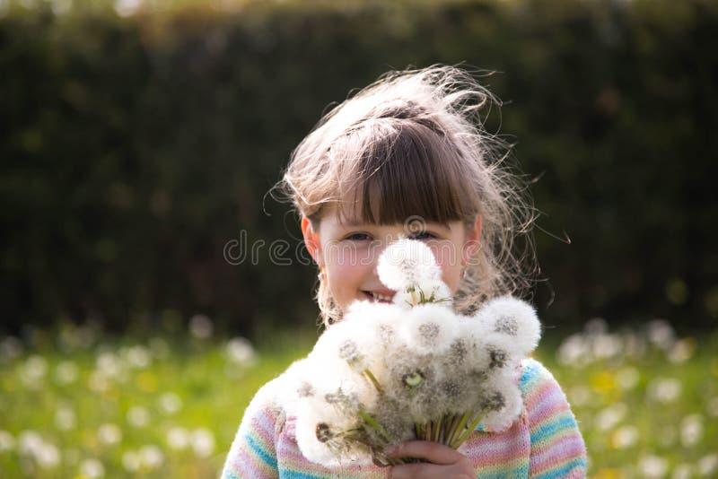 Härlig flicka med en bukett av vita maskrosor på en våräng arkivbilder