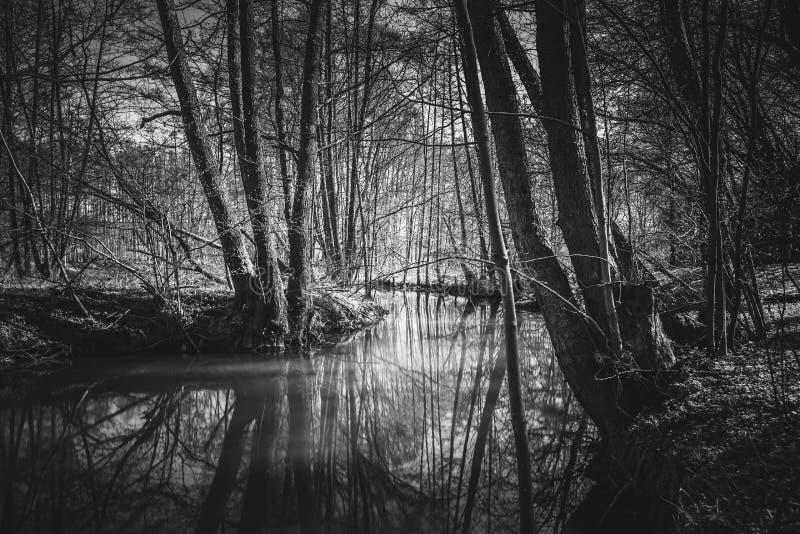 Härlig flod med en stor reflexion i svartvitt arkivbilder
