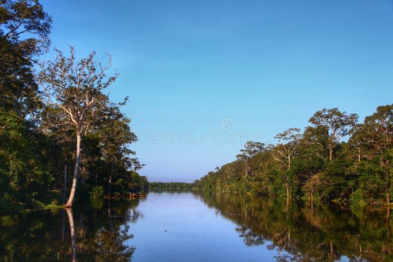 Härlig flodsikt som omges av tropiska träd arkivbild