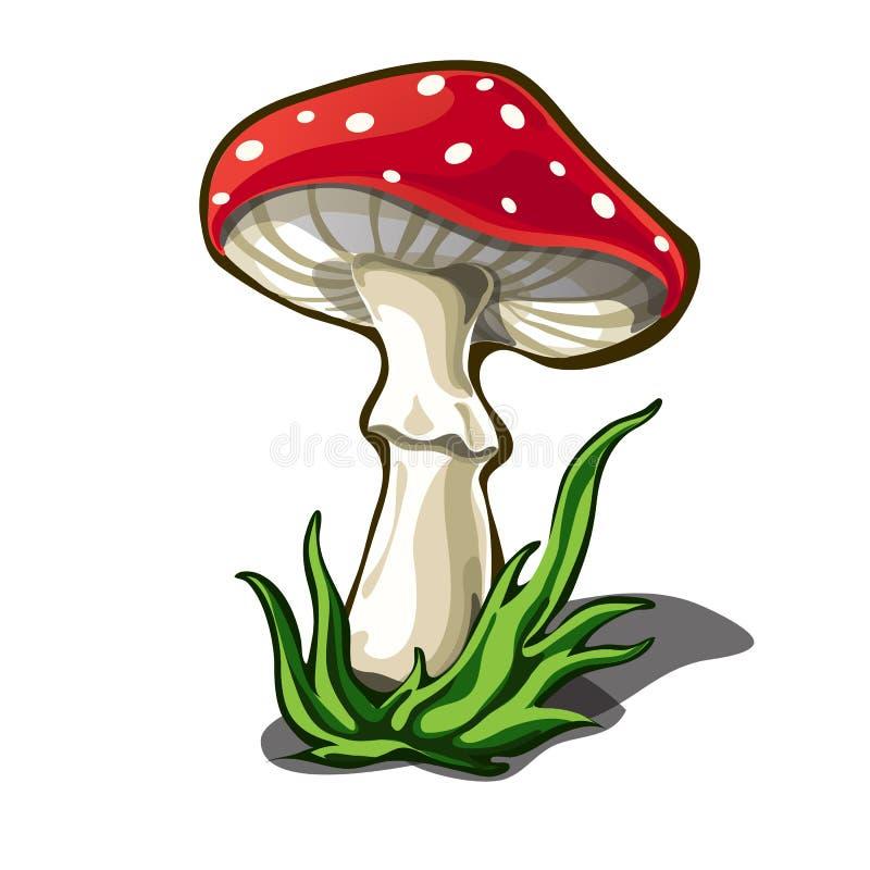 Härlig flugsvamp som isoleras på vit bakgrund plocka svamp giftigt Illustration för vektortecknad filmnärbild royaltyfri illustrationer