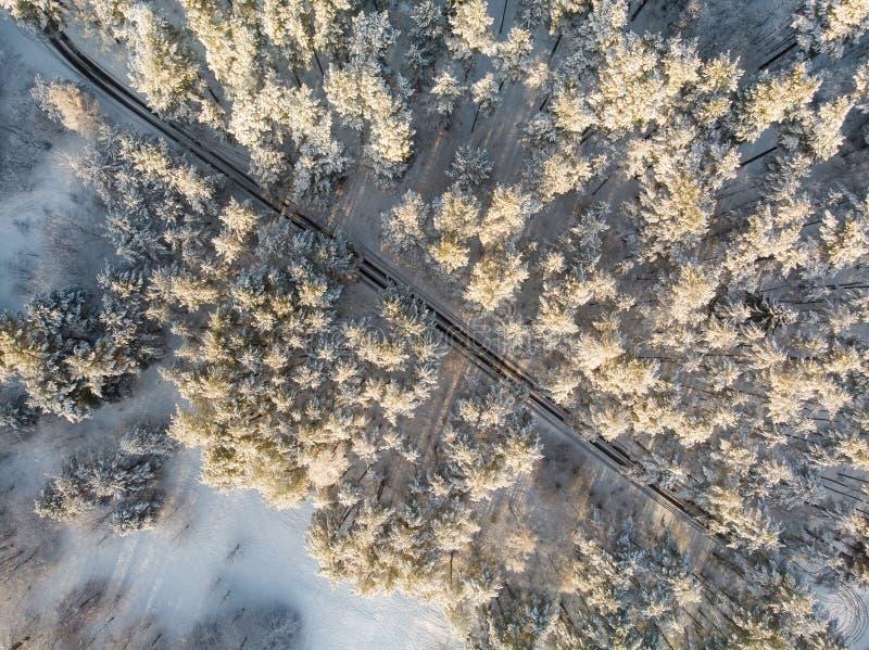 Härlig flyg- sikt av dolda pinjeskogar för snö och en vägspolning bland träd Rimfrostis och hoarfrost som täcker träd Vinter royaltyfri bild