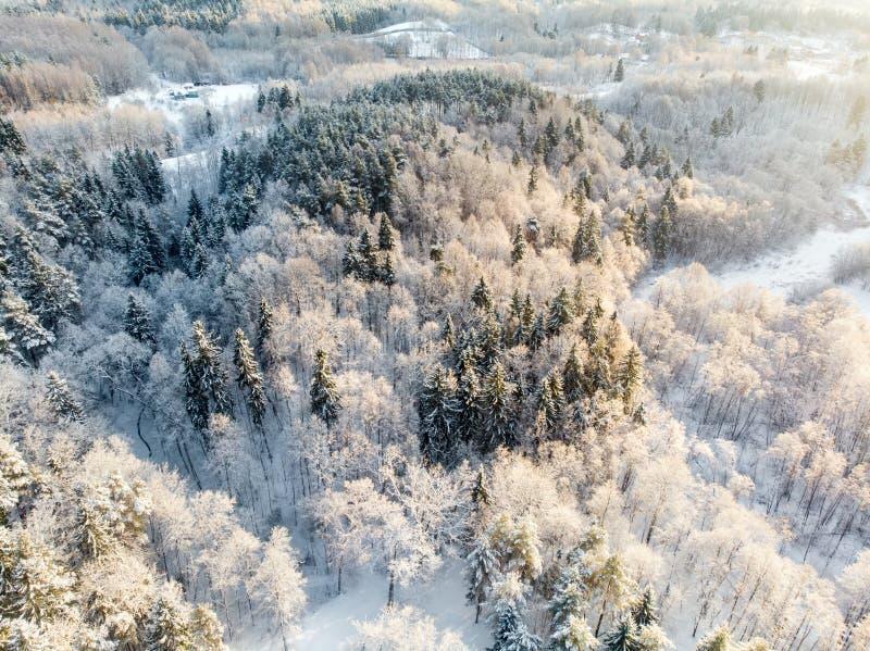 Härlig flyg- sikt av dolda pinjeskogar för snö Rimfrostis och hoarfrost som täcker träd Vinterlandskap nära Vilnius, royaltyfria bilder