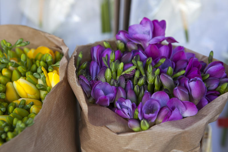 Härlig freesia blommar buketten fotografering för bildbyråer