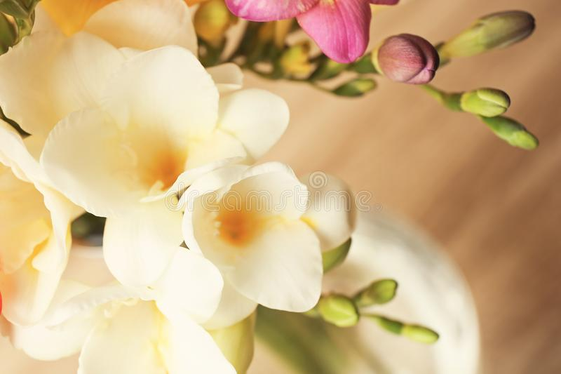 Härlig freesia blommar på suddig bakgrund royaltyfri fotografi