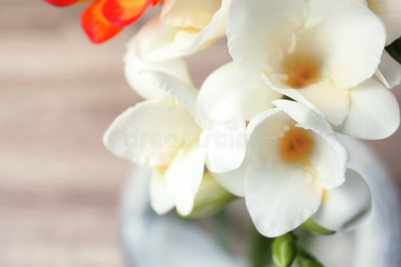 Härlig freesia blommar på suddig bakgrund royaltyfria foton