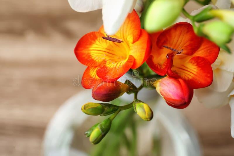 Härlig freesia blommar på suddig bakgrund royaltyfria bilder