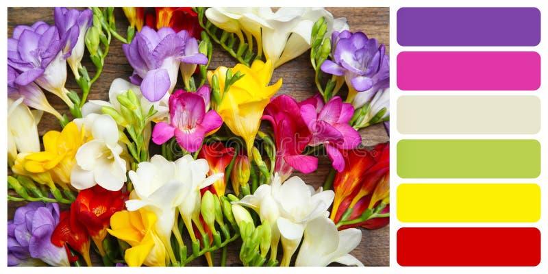 Härlig freesia blommar på träbakgrund royaltyfri foto