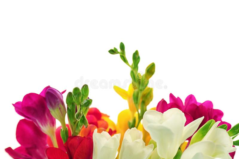 Härlig freesia blommar på vit bakgrund fotografering för bildbyråer