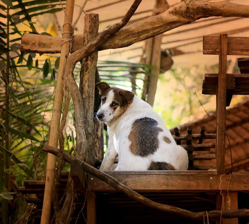 Härlig gårdhund royaltyfri foto